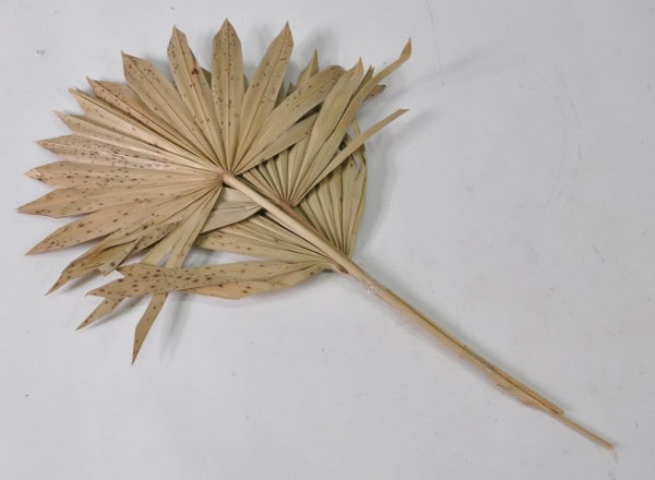 """3er Set Palmspeer natur ca. 55 cm """"10541011400"""""""